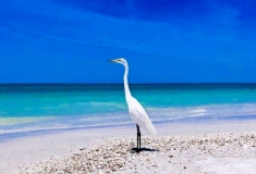 Florida-Sights-Pics-for-Gallery-15